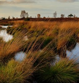 Historia de los humedales artificiales para depuración de aguas
