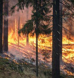Incendios forestales y su afectación a las aguas