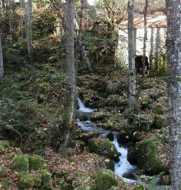Un rincón donde el agua vuelve a entorno natural.