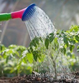 De la depuración sostenible al reciclaje del agua. Un ciclo completo